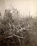 Click image for larger version.  Name:The Boneyard, Monhegan Island.jpg Views:111 Size:85.2 KB ID:213035