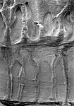 Click image for larger version.  Name:Erosion Detail, Colorado Nat'l Mnmt..jpg Views:133 Size:76.9 KB ID:210693