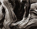 Click image for larger version.  Name:MT Evans Bristlecone Macro.jpg Views:56 Size:104.6 KB ID:217961