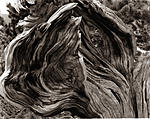 Click image for larger version.  Name:Mt Evans Bristlecone Snag.jpg Views:52 Size:108.7 KB ID:217967