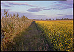 Click image for larger version.  Name:flowers.jpg Views:35 Size:103.6 KB ID:188957