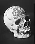 Click image for larger version.  Name:4x5_skull_web.jpg Views:65 Size:41.4 KB ID:180100