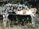 Click image for larger version.  Name:Catnap, on Bench.jpg Views:56 Size:110.7 KB ID:214415