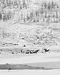 Click image for larger version.  Name:larch-valley-crop-4x5-1.jpg Views:16 Size:71.8 KB ID:192266