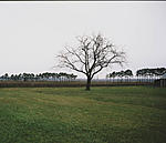 Click image for larger version.  Name:Arbre (St-Sulpice) copie.jpg Views:22 Size:70.8 KB ID:213078