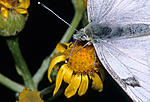 Click image for larger version.  Name:Butterfly close.jpg Views:24 Size:177.4 KB ID:213498
