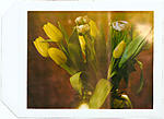 Click image for larger version.  Name:tulips_pola58_0003-2.jpg Views:104 Size:52.9 KB ID:70388