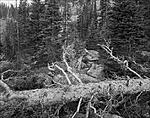 Click image for larger version.  Name:steves_trail_bw_002a.jpg Views:90 Size:193.4 KB ID:197078