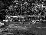 Click image for larger version.  Name:Fallen tree at river side.jpg Views:184 Size:178.0 KB ID:213764