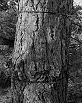 Click image for larger version.  Name:Tree-positive.jpg Views:77 Size:136.4 KB ID:215174