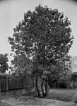 Click image for larger version.  Name:Ed's tree-1.jpg Views:40 Size:72.6 KB ID:215409