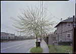 Click image for larger version.  Name:tree.jpg Views:33 Size:76.9 KB ID:188958