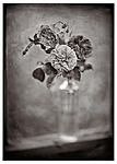 Click image for larger version.  Name:three roses #1.LFP.jpg Views:114 Size:41.2 KB ID:203976