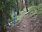 Click image for larger version.  Name:Tree ribbon.jpg Views:147 Size:170.4 KB ID:216408