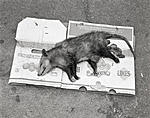 Click image for larger version.  Name:possum.jpg Views:44 Size:113.6 KB ID:209884