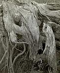 Click image for larger version.  Name:Driftwood, Monhegan copy.jpg Views:176 Size:112.0 KB ID:183939