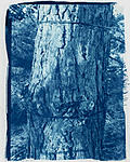 Click image for larger version.  Name:Cyanotype #3 (16 min) (2).jpg Views:33 Size:130.4 KB ID:215172