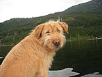 Click image for larger version.  Name:Hailey at the lake2.jpg Views:21 Size:211.0 KB ID:216737