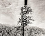 Click image for larger version.  Name:PADDY CREEK SNAG - Alpine, Arizona.jpg Views:79 Size:95.0 KB ID:206393