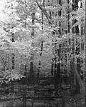 Click image for larger version.  Name:kodak infrared 8x10.jpg Views:50 Size:125.6 KB ID:207571