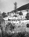 Click image for larger version.  Name:Lake Creek Comm Tree.jpg Views:57 Size:84.3 KB ID:161022