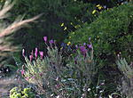 Click image for larger version.  Name:Summer flowers.jpg Views:41 Size:85.8 KB ID:204097