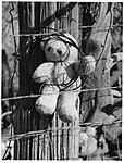 Click image for larger version.  Name:Teddy Bear, Weirdo NV.jpg Views:43 Size:71.1 KB ID:201408