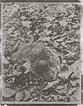 Click image for larger version.  Name:Groundhog_in_Repose_Pd.jpg Views:33 Size:89.0 KB ID:212996
