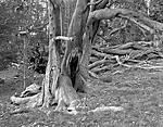 Click image for larger version.  Name:Knarled Limber Pines.jpg Views:26 Size:228.7 KB ID:215807