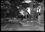 Click image for larger version.  Name:Pacific groove alone at the grave_Jsm.jpg Views:67 Size:79.8 KB ID:210558